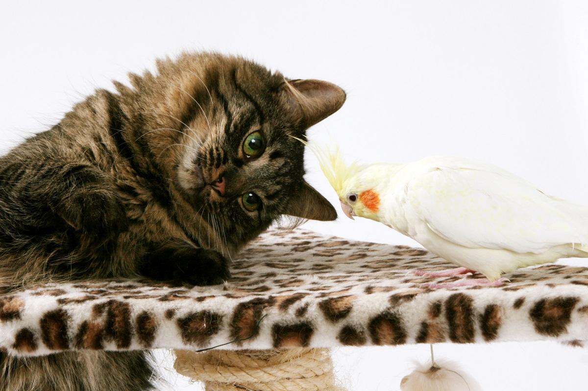 cat bird temptation-1-reduced