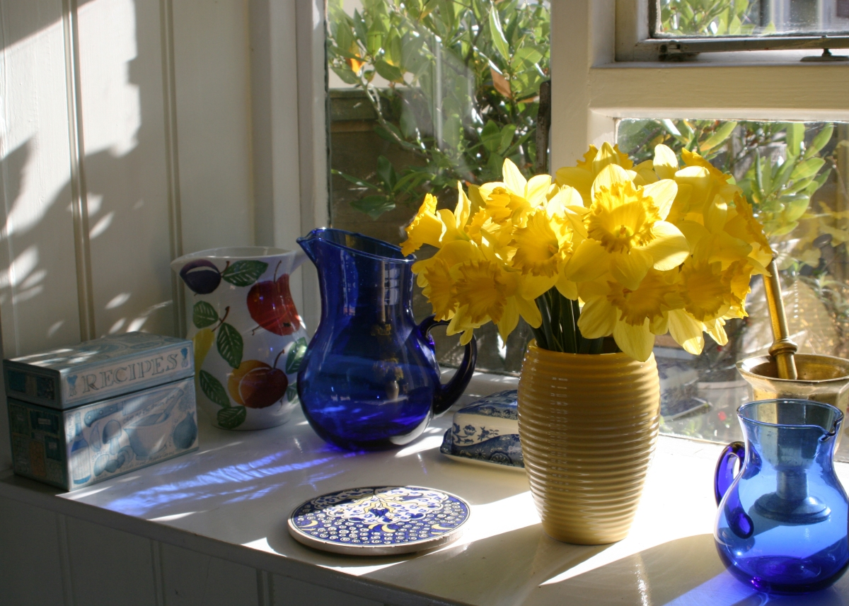daffodils in window