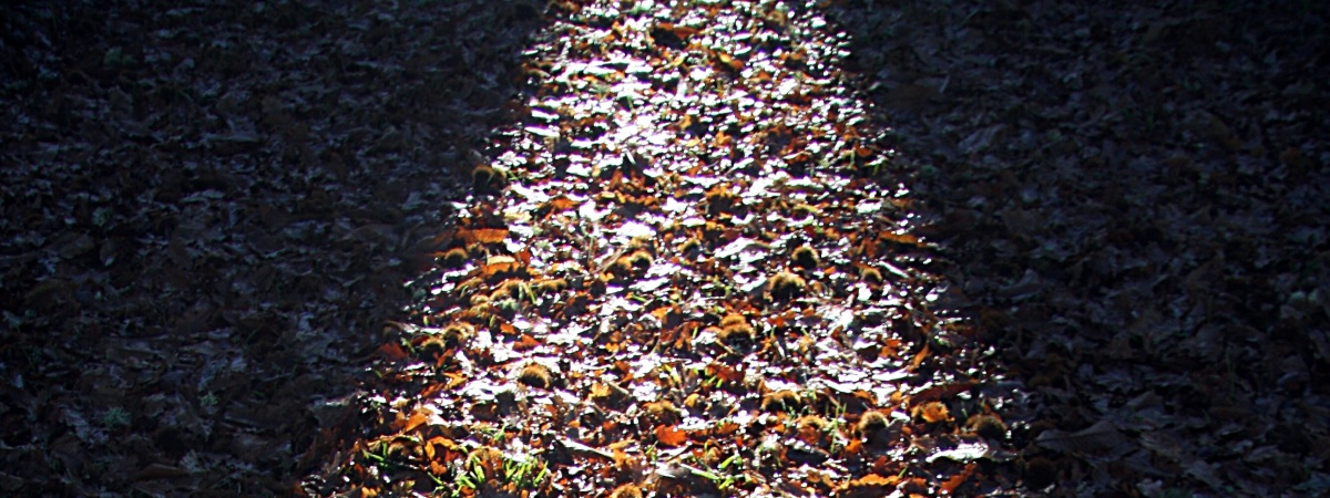 lighted path-cropped