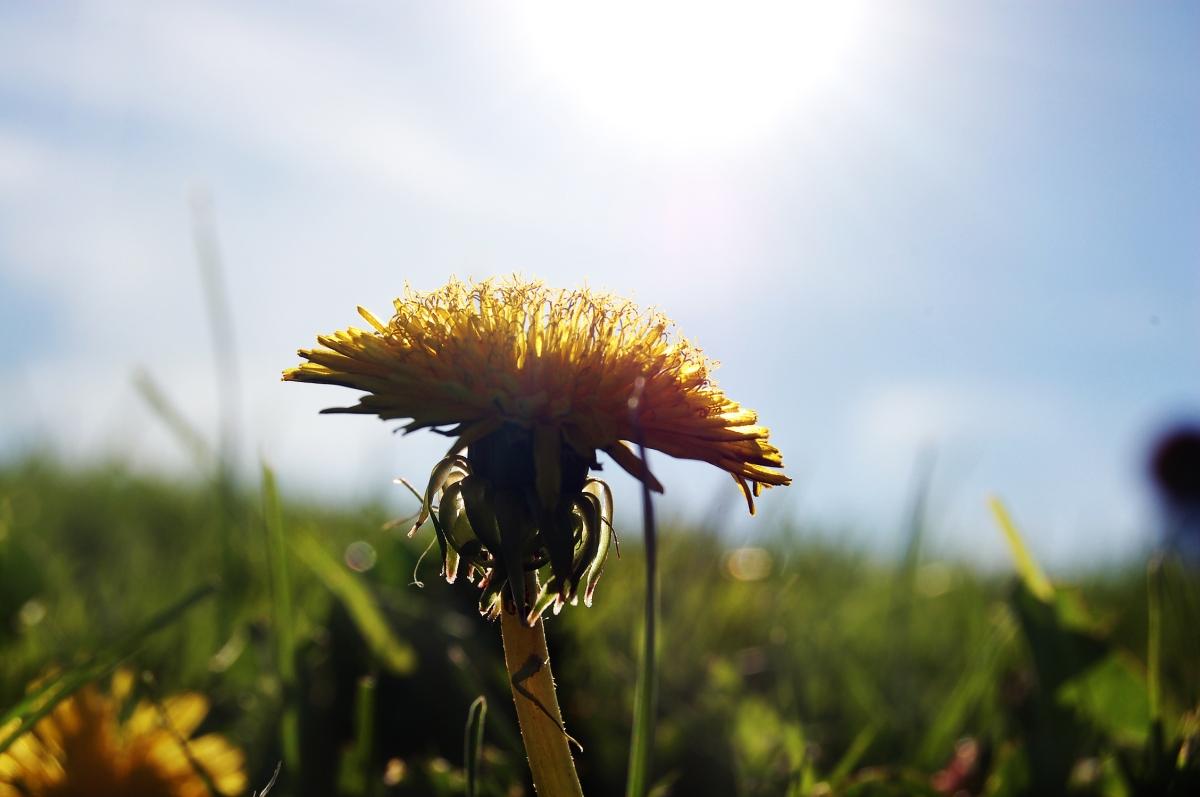 flower in the sunlight