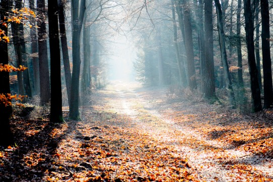 Image result for images of light on pathway