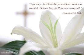 Matthew 28:5b-6a