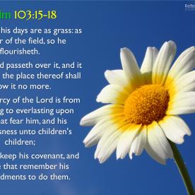 Psalm 103:15-18