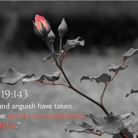 Psalm 119:143