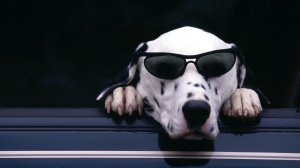 doggie cool