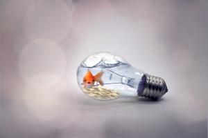 goldfish in lightbulb