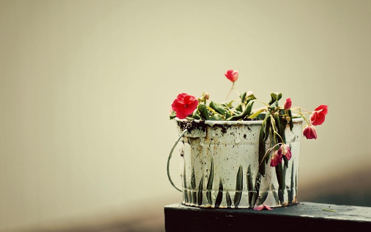 basic bucket of flowers-1