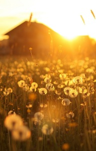 dandelion+house sunset_cropped