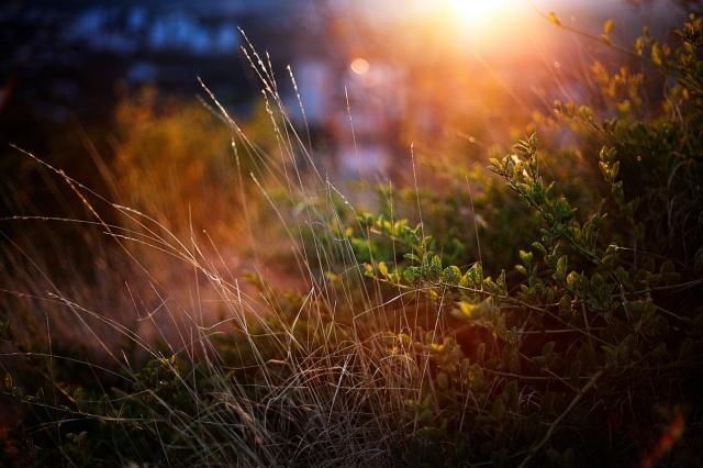 grass + shrubs