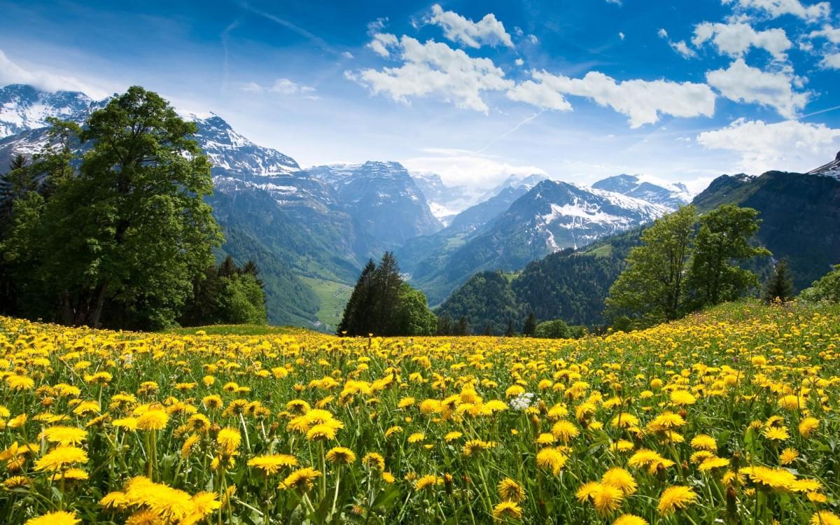 flowery meadow-2