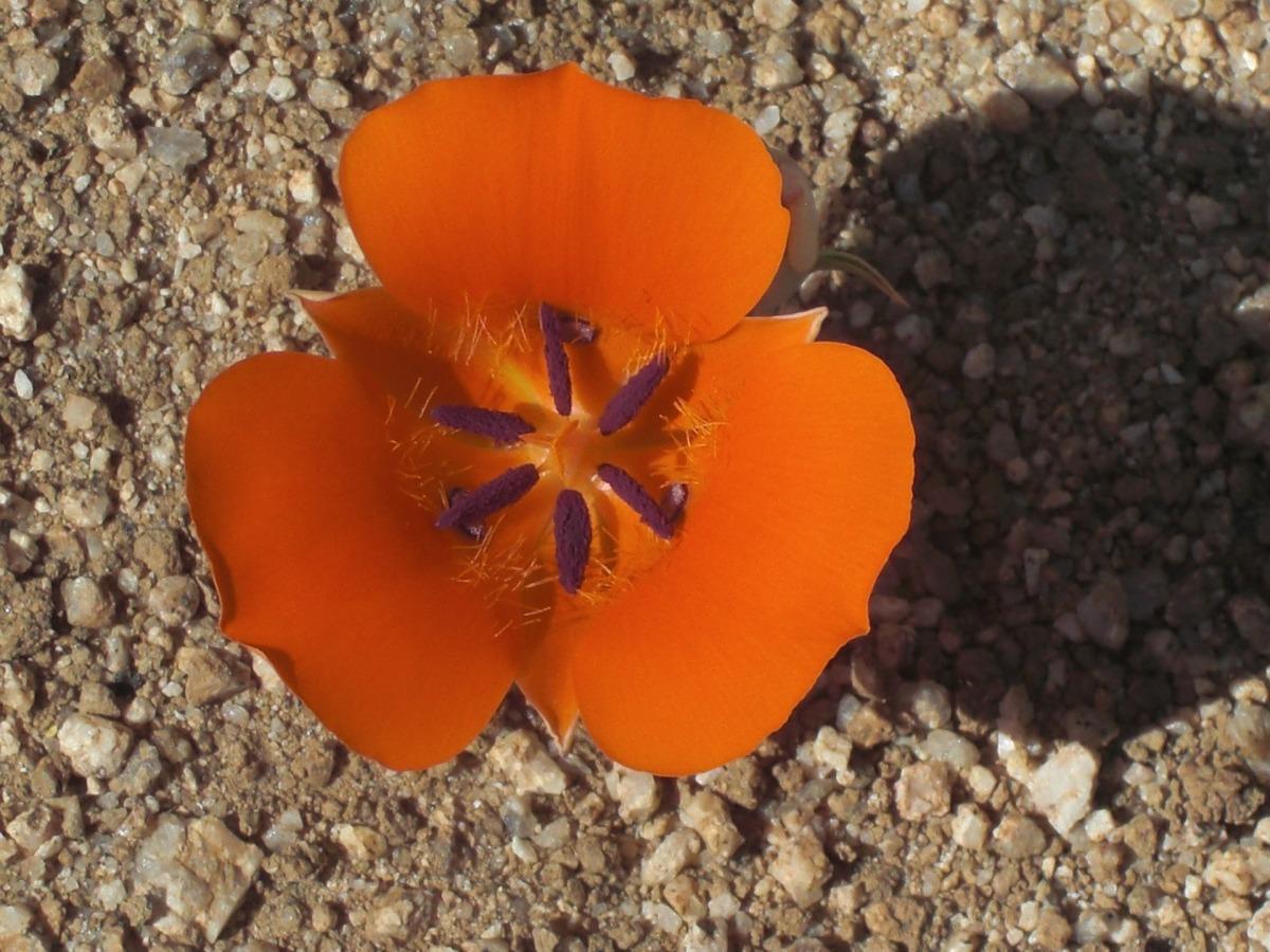flower-165474_1920