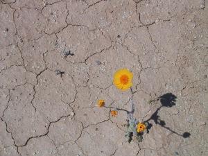 flower in desert-2