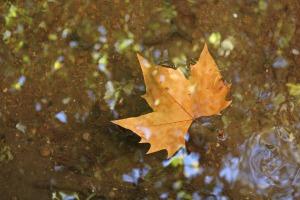 leaf-546383_1920