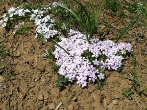 wild-flowers-216029_1280