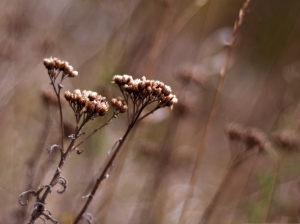 Dry-Wild-Flowers-Beautiful-Flowers-in-Autumn-Dry-and-Fading