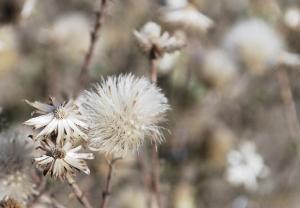 fadedflowers