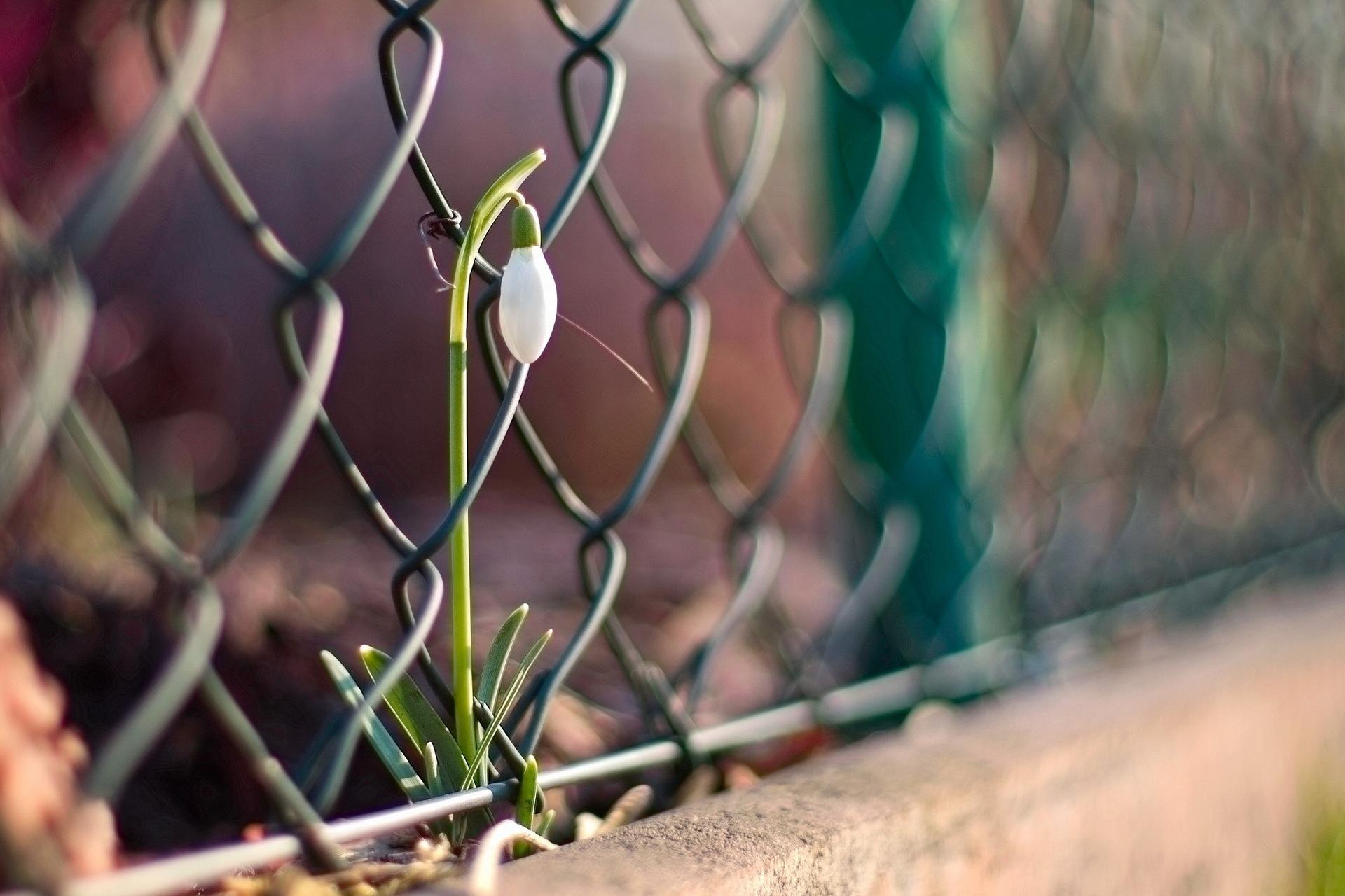 Забор цветы  № 2488809  скачать