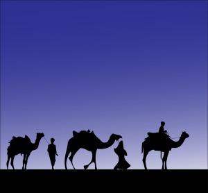 camel-316894