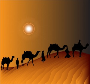 camel-train-163727
