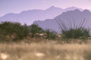 desert-scenics-land-725x483