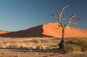 Thorn_Tree_Sossusvlei_Namib_Desert_Namibia_Luca_Galuzzi_2004a