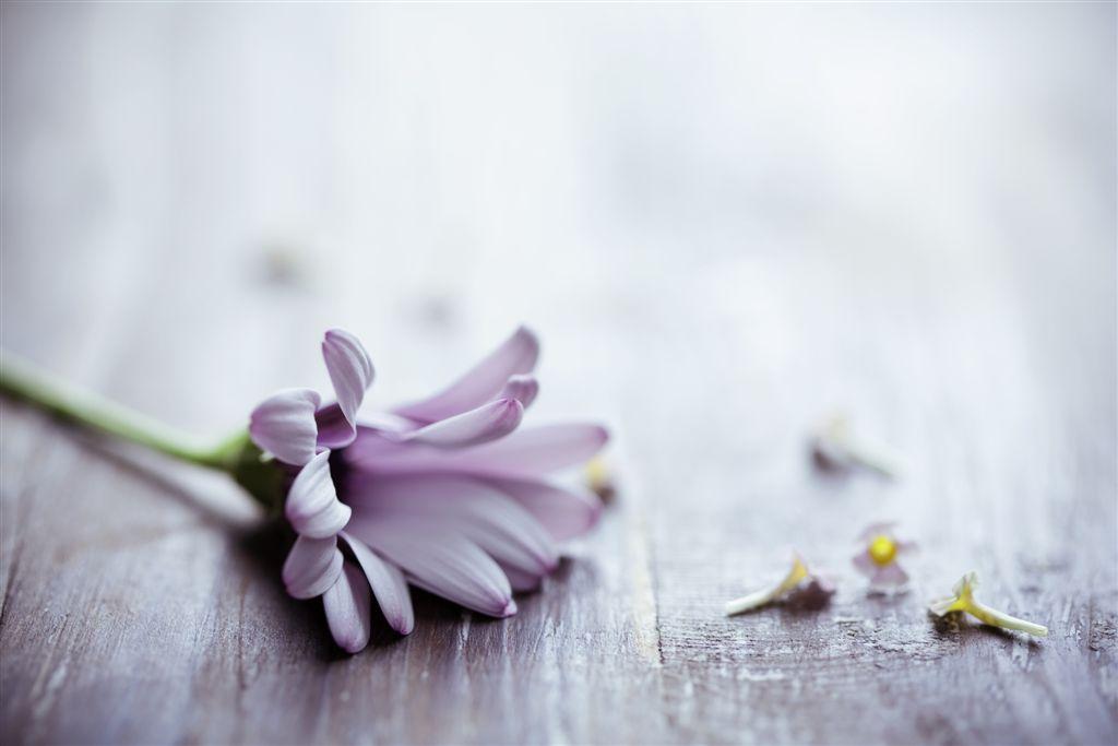 flowers on rustic wood