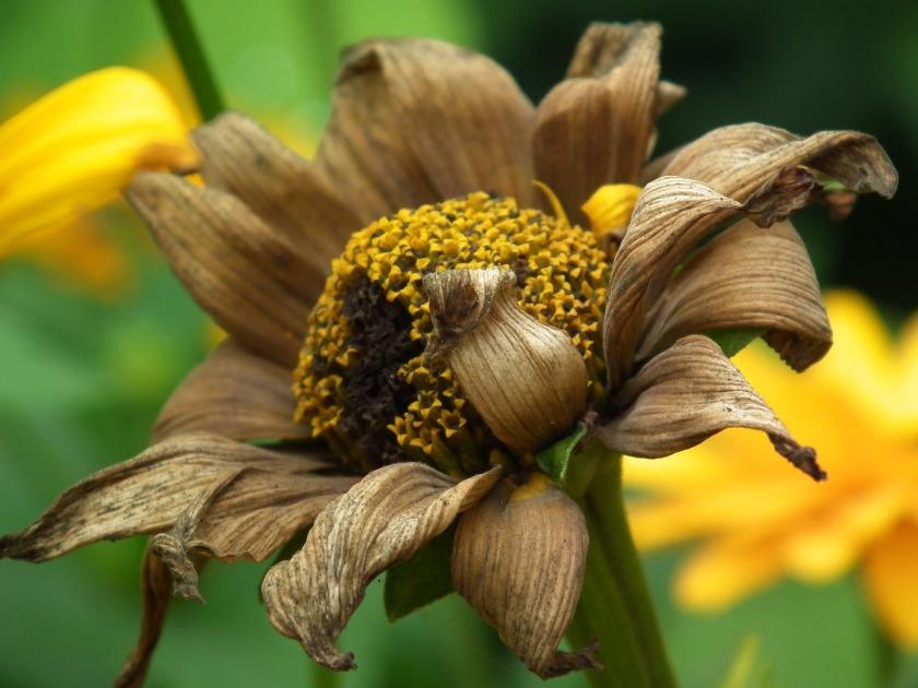 flower-1042490_1920